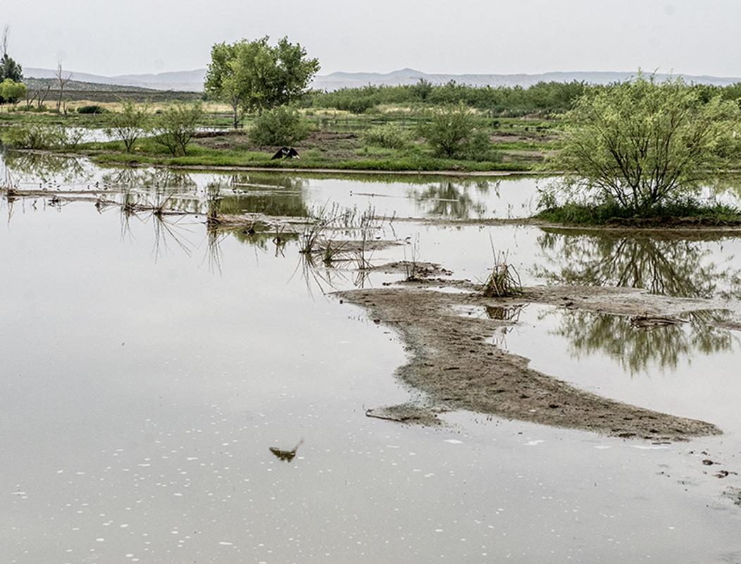 Bishop Wetlands and Morlock Ranch TPWD Newsletter