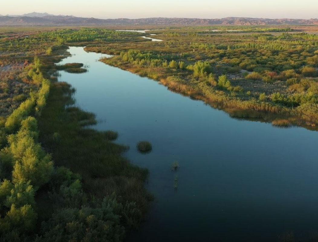 Laguna Restoration Site 2020