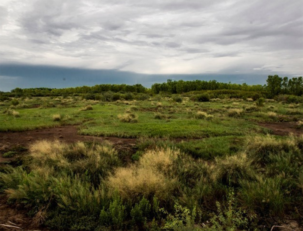 Yuma East Wetlands, Phases 1 and 2